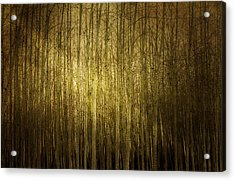Can't See The Forest For The Trees Acrylic Print