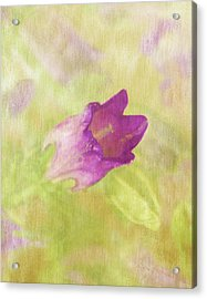 Canterbury Bell Flower Painted 2 Acrylic Print by Sandi OReilly
