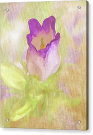 Canterbury Bell Flower Painted Acrylic Print by Sandi OReilly