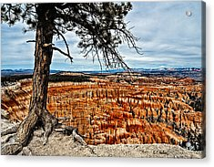 Canyon Overlook Acrylic Print by Christopher Holmes