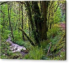 Canyon Trail Acrylic Print