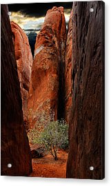 Canyon Tree Acrylic Print