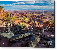 Canyonlands White Rim Acrylic Print by Inge Johnsson