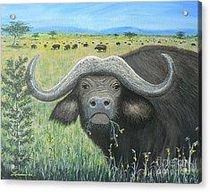 Cape Buffalo Acrylic Print by Don Lindemann