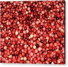 Cape Cod Cranberries Acrylic Print