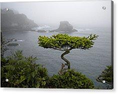 Cape Flattery Noble Acrylic Print