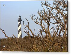 Cape Hatteras Lighthouse Through The Brush Acrylic Print