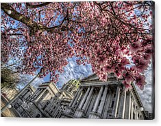 Capitol Blossoms Acrylic Print