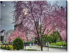 Capitol Tree Acrylic Print by Randy Wehner Photography