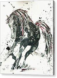 Capriccio Acrylic Print by Penny Warden