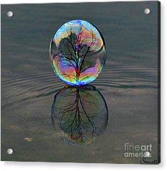 Captured  Acrylic Print