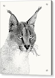 Caracal Wild Cat Portrait Acrylic Print