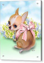 Caramel Chihuahua Baby Acrylic Print by Catia Cho