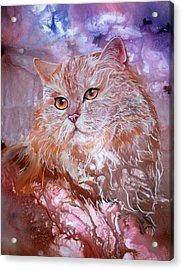Caramel Cream Acrylic Print by Sherry Shipley