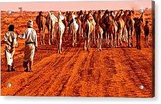Caravan In The Desert Acrylic Print by Kobby Dagan