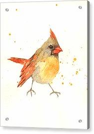 Cardinal - Female Cardinal Acrylic Print by Alison Fennell