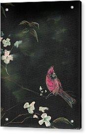 Cardinal 1 Acrylic Print by Raymond Doward