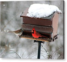 Cardinal And Sparrow At Feeder Acrylic Print