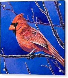 Cardinal Acrylic Print by Bob Coonts