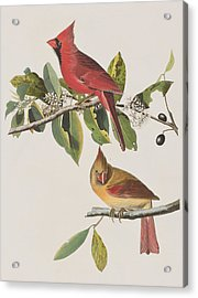 Cardinal Grosbeak Acrylic Print by John James Audubon