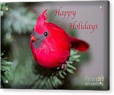 Cardinal Happy Holidays Acrylic Print