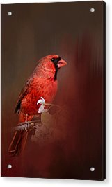 Cardinal In Antique Red Acrylic Print by Jai Johnson