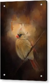 Cardinal In The Evening Light Bird Art Acrylic Print