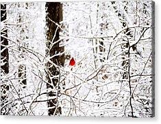 Cardinal In The Snow Acrylic Print