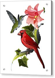 Cardinal On Ivy Branch With Hummingbird And Pink Lily Acrylic Print