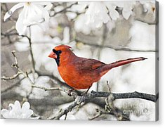 Acrylic Print featuring the photograph Cardinal Spring - D009909-a by Daniel Dempster