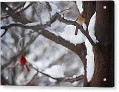 Cardinals Acrylic Print