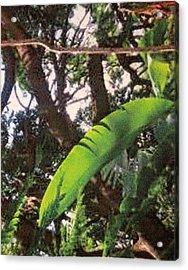 Acrylic Print featuring the photograph Caribbean Banana Leaf by Ian  MacDonald