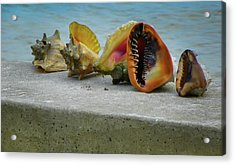 Acrylic Print featuring the photograph Caribbean Charisma by Karen Wiles
