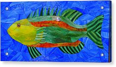 Caribbean Grouper Acrylic Print by Charles McDonell