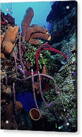 Caribbean Kaleidoscope  Acrylic Print