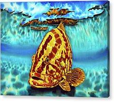 Caribbean Nassau Grouper  Acrylic Print
