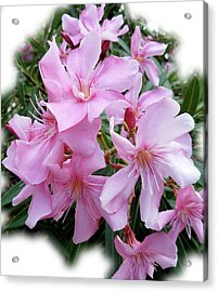 Acrylic Print featuring the photograph Caribbean Oleander by Marie Hicks