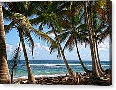 Caribbean Palms Acrylic Print