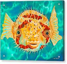 Caribbean Puffer Acrylic Print by Daniel Jean-Baptiste