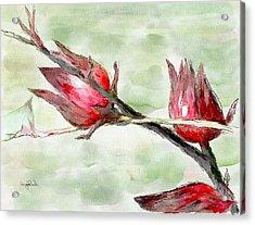 Caribbean Scenes - Sorrel Plant Acrylic Print