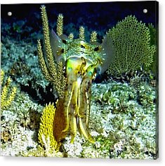 Caribbean Squid At Night - Alien Of The Deep Acrylic Print