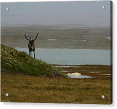 Caribou Fog Acrylic Print by Anthony Jones
