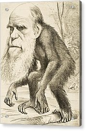 Caricature Of Charles Darwin Acrylic Print by English School