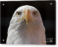 Carlisle Eagle Acrylic Print