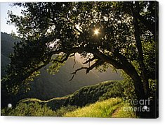 Carmel-valley-32-20 Acrylic Print by Craig Lovell