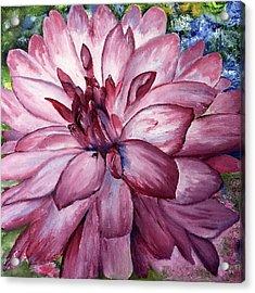 Carmine Dahlia Acrylic Print