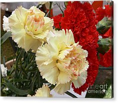Carnation 3 Acrylic Print