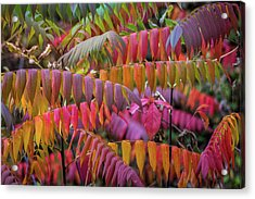 Acrylic Print featuring the photograph Carnival Of Autumn Color by Bill Pevlor