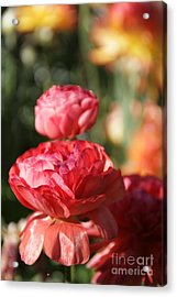 Carnival Of Flowers 01 Acrylic Print by Andrea Jean