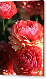Carnival Of Flowers 02 Acrylic Print by Andrea Jean